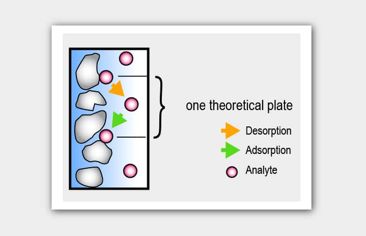 number of theoretical plates, column efficiency, adsorption, desorption, analyte, chromatography
